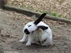 Bunny Tibo