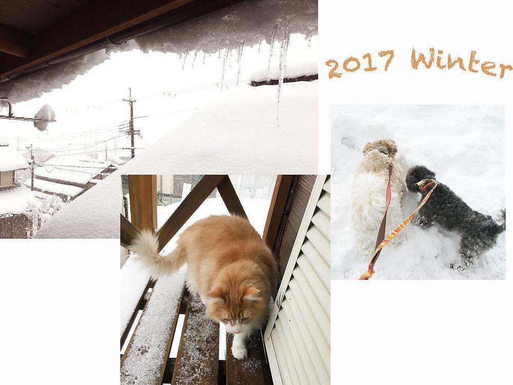 Puut Cococus 2017 京都 雪景色