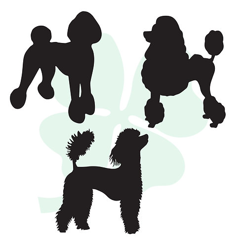 Poodle Vinyl Stickers