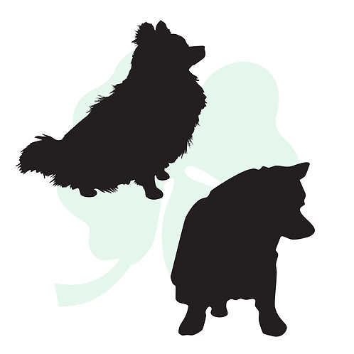 Pomeranian Vinyl Stickers