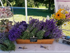 Freshly Harvested Lavender from the Farm