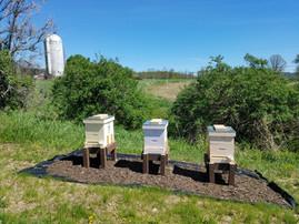 Honeybee Hives