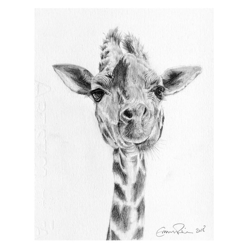 IG_giraffe.jpg