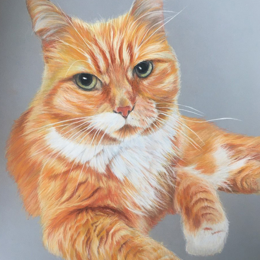 Cat_dash.jpg