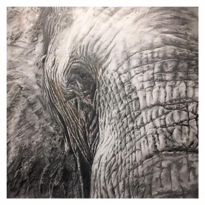 Elephant_closeup.JPG