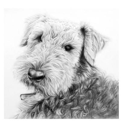Dibby Dog.jpg