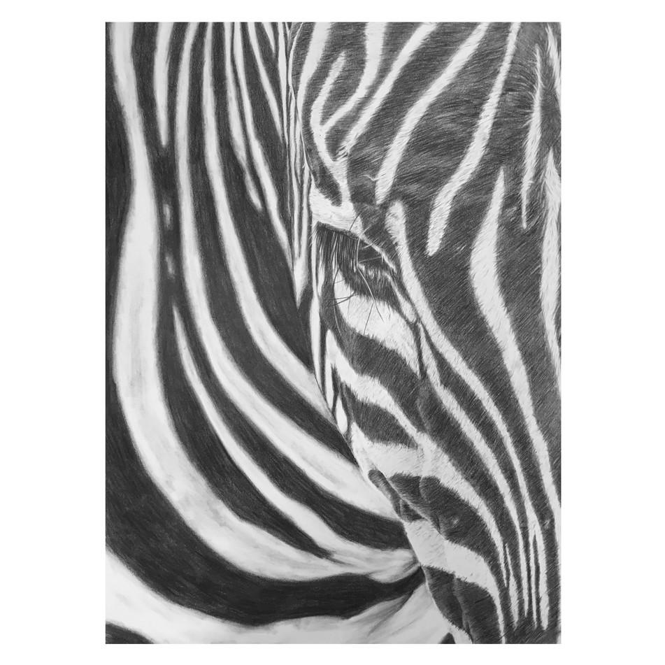 IG_Zebra_closeup.jpg