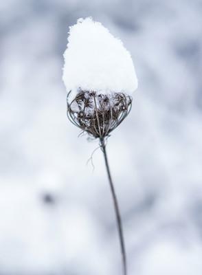 Schneemütze