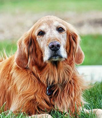 Canva - Dog in Field.jpg