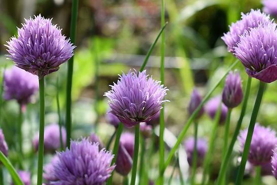 aromatic-bloom-blooming-533297.jpg