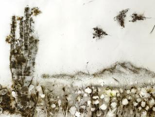 Art by Cai Guo-Qiang