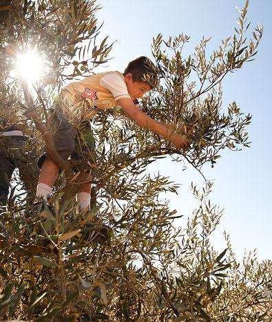 Visit Palestine Image.jpg