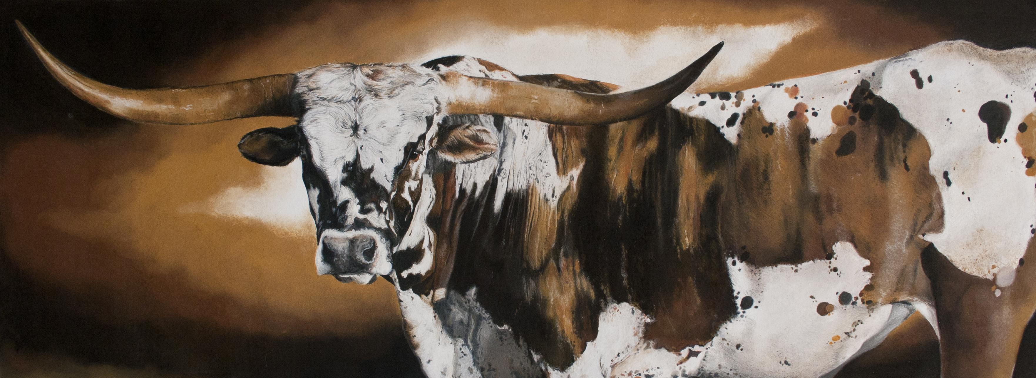 longhorn bonte koe