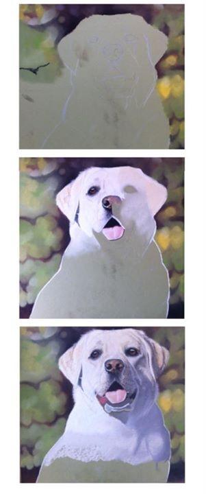 Wat een schatje, is het niet? De lieve labrador Tessel van Jeroen  & Manon .jpg