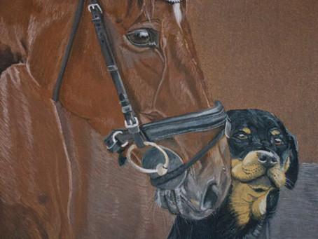 Paard met Rottweiler.