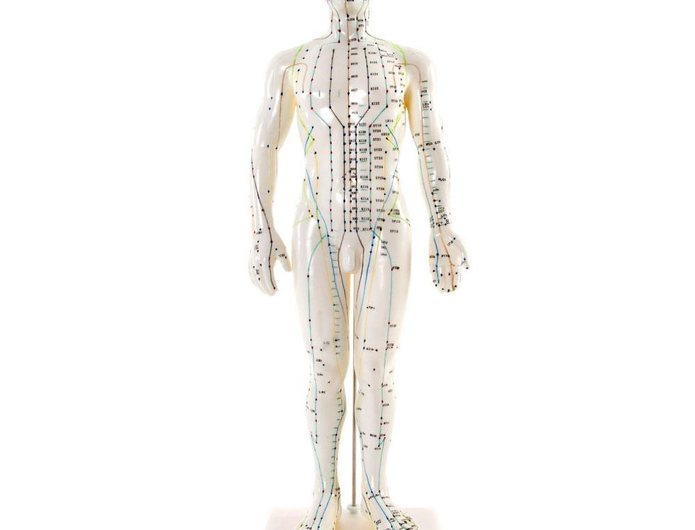 Acupuncture Body Model - Male 50cm