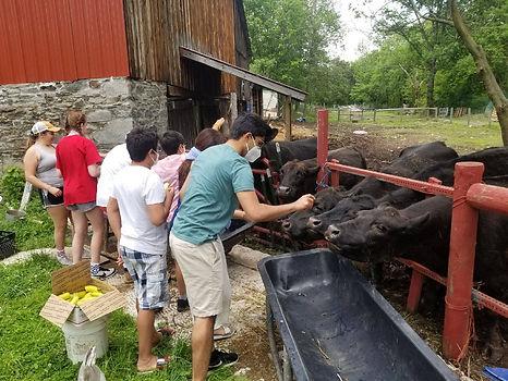 Lakshmi Cow Sanctuary Volunteers
