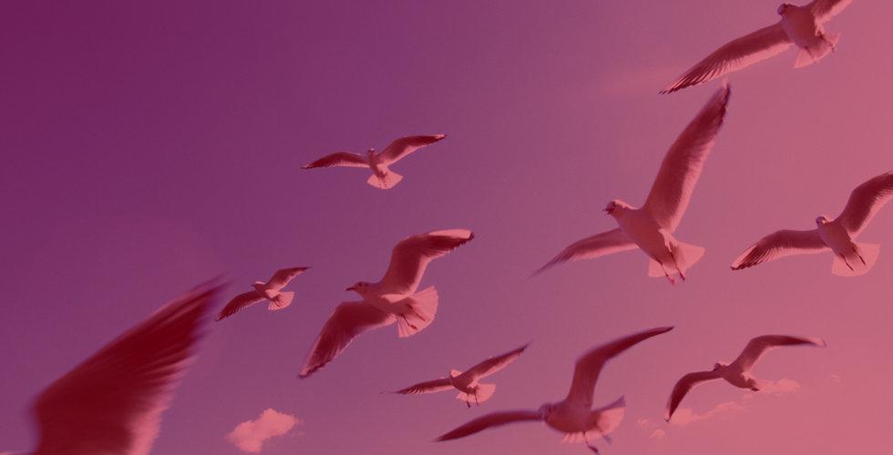 Birds image.jpg