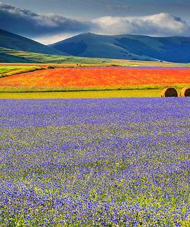 castelluccio-fioritura-1-768x512.jpg