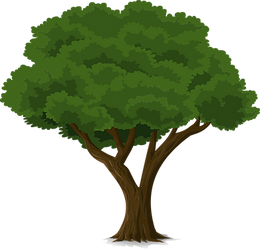 tree-576848_1280.png