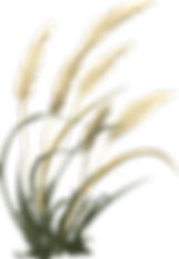 wheat-576548_1280.png