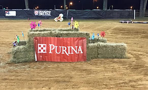 Horse Obstacle at Alabama Obstacle Challenge Series Competion, Purina Sponsor
