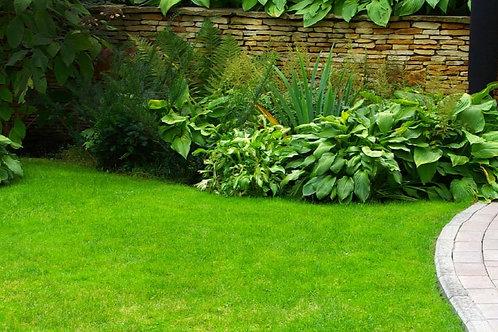 Assorted Garden Package - Jumbo