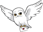owl newsletter.png