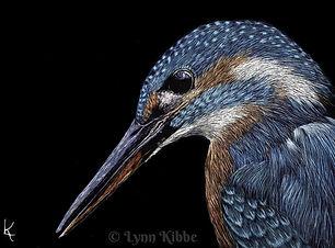 Kingfisher 72 960w.jpg