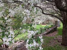 Garden in Mill Foundation
