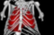 dane bones overlay.JPG