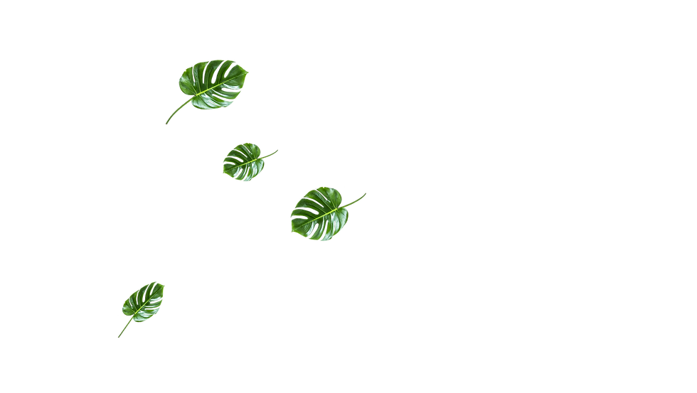 leaf_slider_5_edited.png