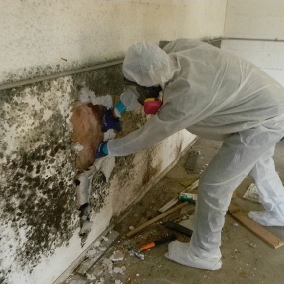 Sewage and Mold Clean up