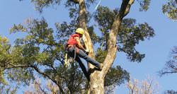 tree-trimmin-650-2Ventura-County-Tree-Service-Tree-Trimming-Service-33