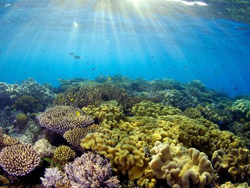 Plongeur responsable, comment se protéger du soleil ?