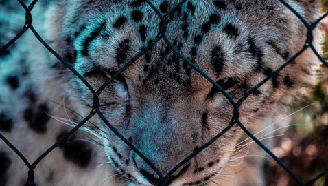 Caged - Smaller Copy.jpg