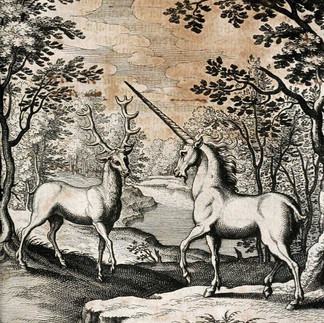 The Deer and the Unicorn