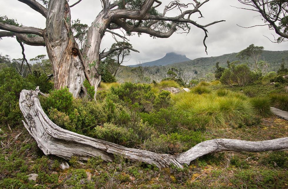 Windermere Views copy.jpg