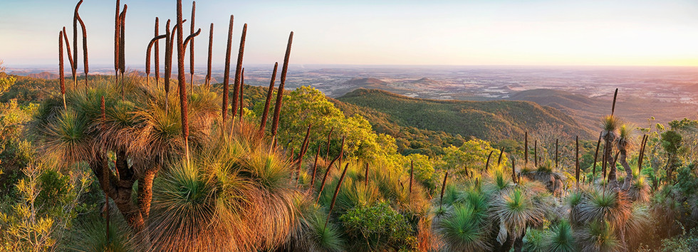 Australian Tablelands - Bunya Mountains