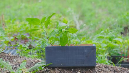 6.14 木箱の藍