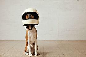 Taxi per animals