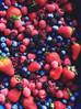 Antiossidanti da Mirtillo ed interazioni con gli alimenti