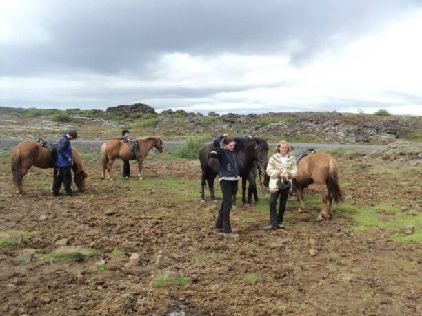 Ride an Icelandic Horse