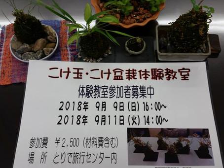 苔玉 苔盆栽体験教室