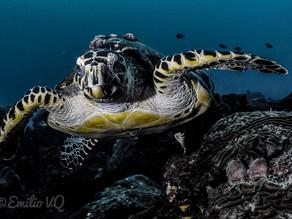 Buceando en Veracruz: el tercer arrecife más importante del mundo.