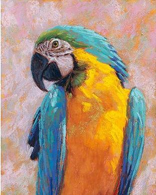 Rita Kirkman 'Macaw - Pastel'.JPG