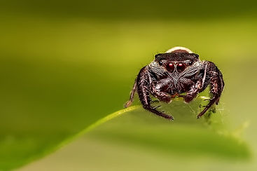 phobie araignee.jpg
