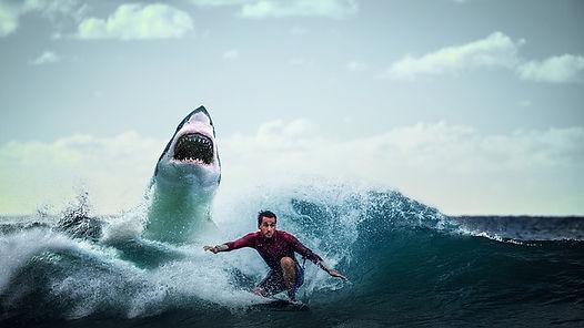 phobie-des-requins.jpg
