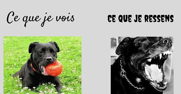 phobi chien.jpg