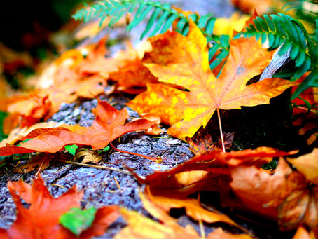 A note about yard waste, concrete, dirt, sod and hazardous waste